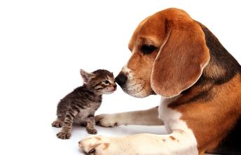 pets_insurance[1]